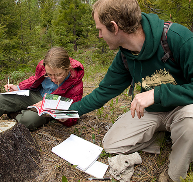 students doing research in forest