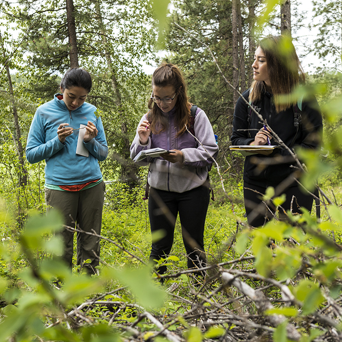 Three women investigate flora in a forest